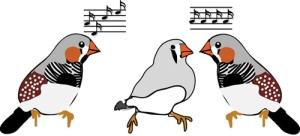 birds3b